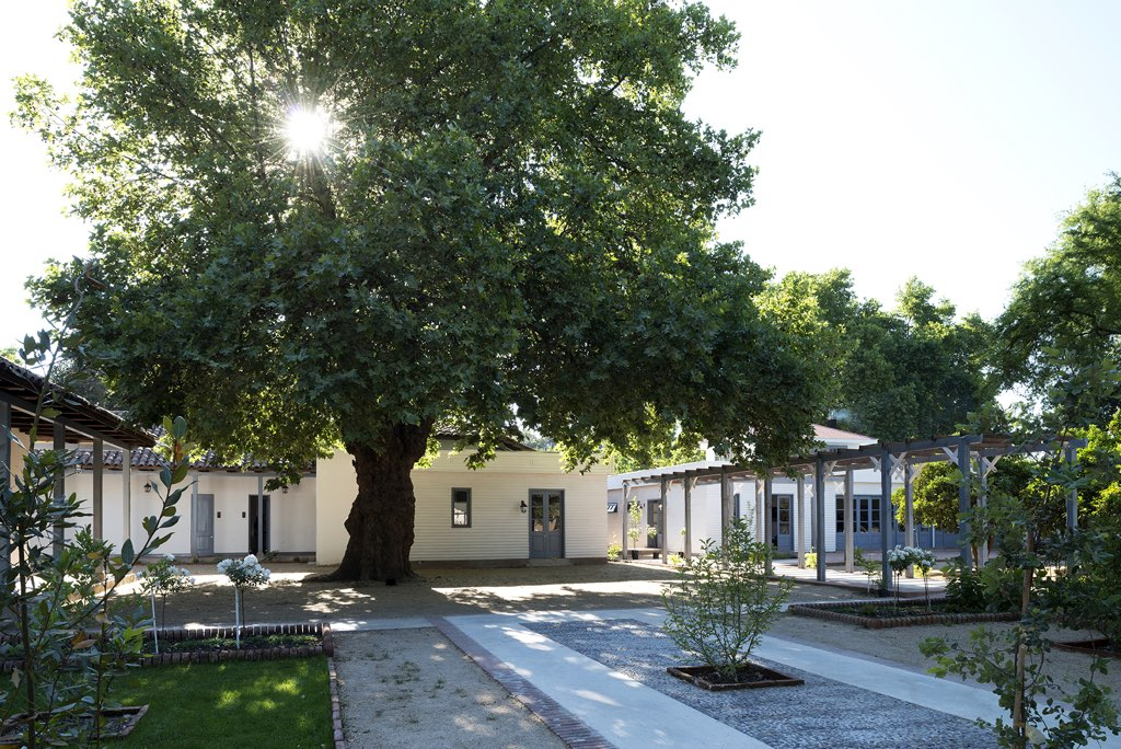 NOI Blend Colchagua Exteriors Central Tree 1