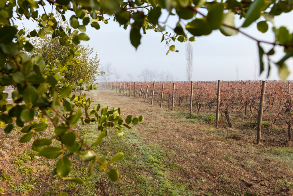 NOI Blend Colchagua Exteriors Vineyards 1