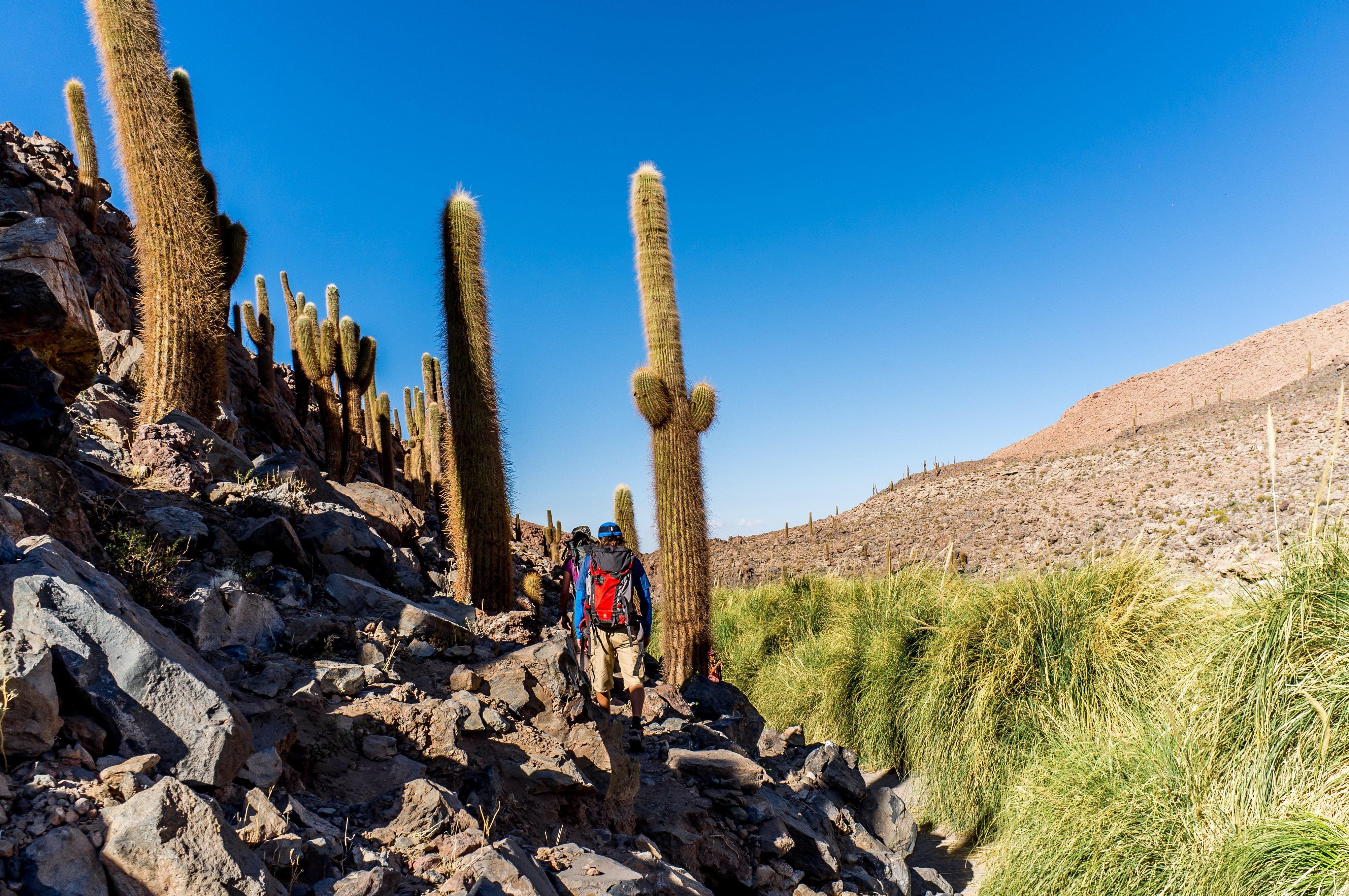NOI Casa Atacama Excursions Guatin 1
