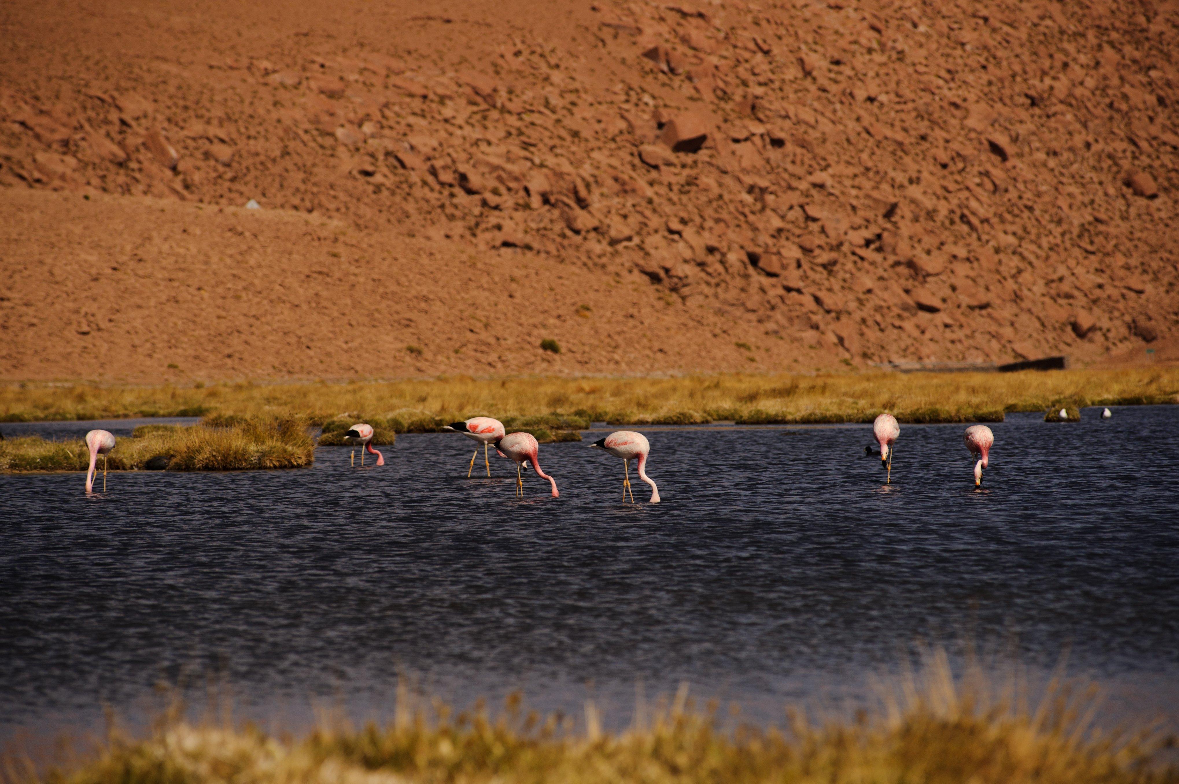 NOI Casa Atacama Excursions Laguna Chaxa 2