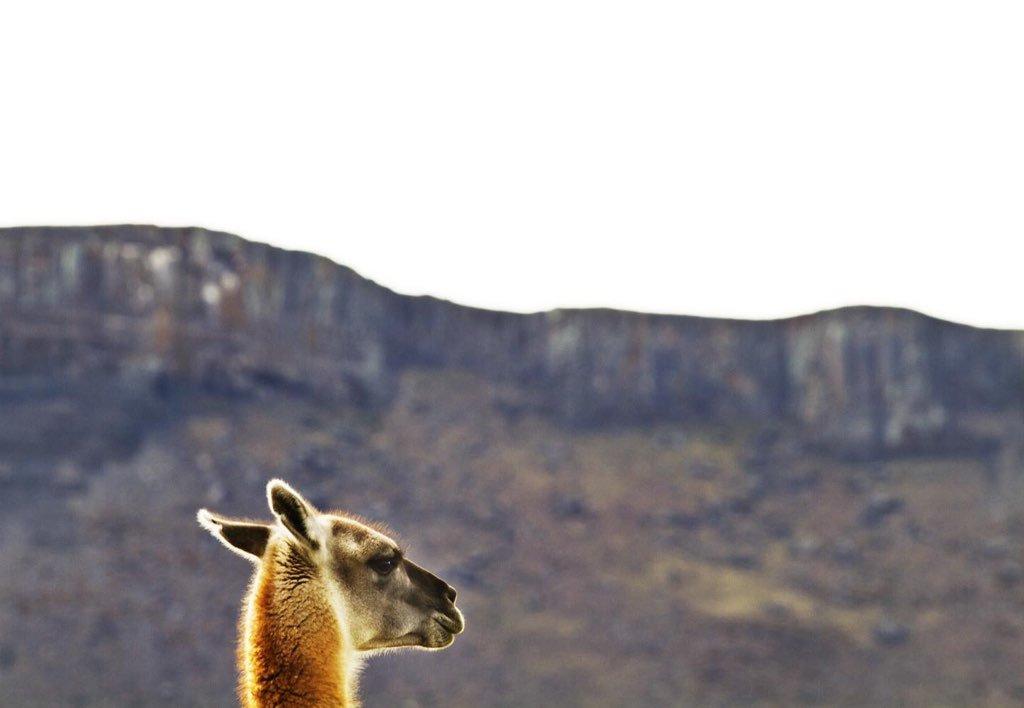 tierra patagonia entorno 00010