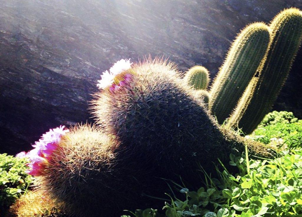 f3 cactus