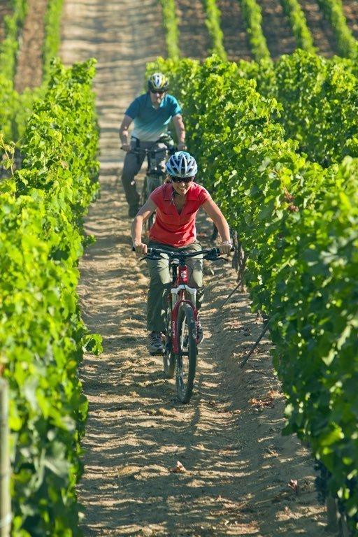 Bike in Apalta2