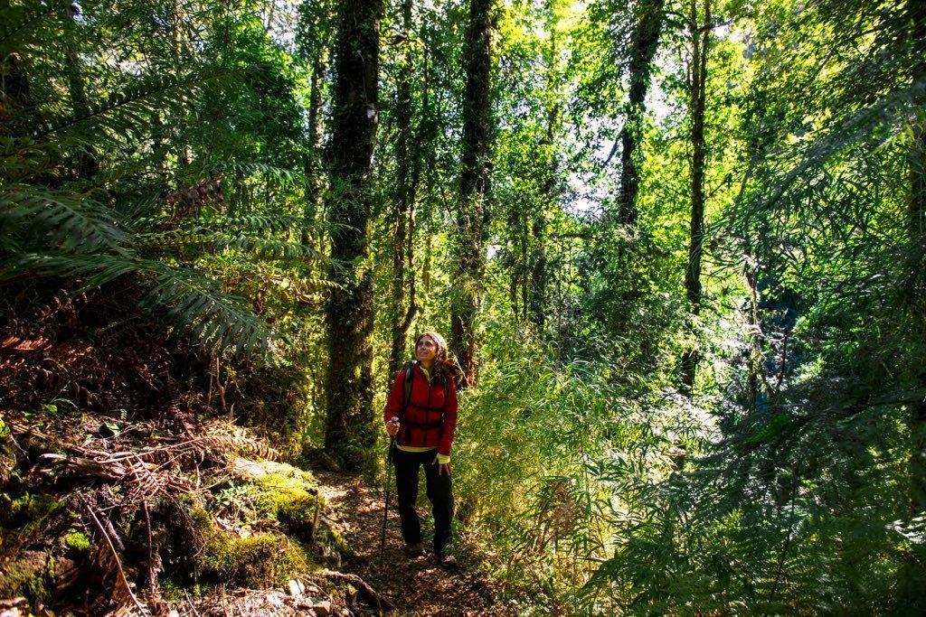 bosque los canelos