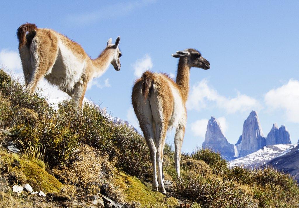 NOI Indigo Patagonia Excursions Torres del Paine 1