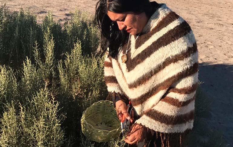 Patricia trabajando hierba