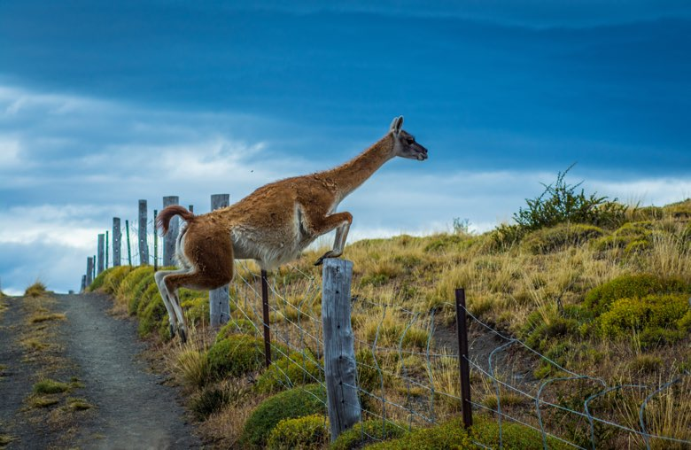 wildlife safari fauna trail 25022015 16695331721 o